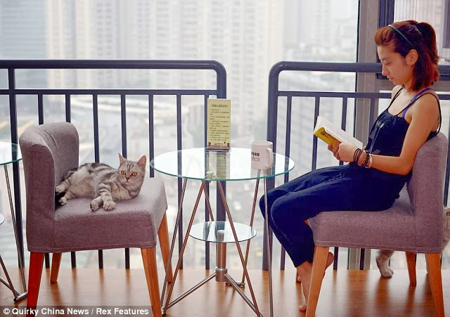 Cat cafe in China, cafe, coffee shop, kopi luwak, organic coffee, arabica, robusta, cafe latte, barista, coffee business, coffee shop business, coffee franchise, cappuccino, espresso, cat cafe