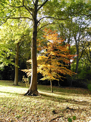 Delicate Beech in the sunlight at Wytham Woods