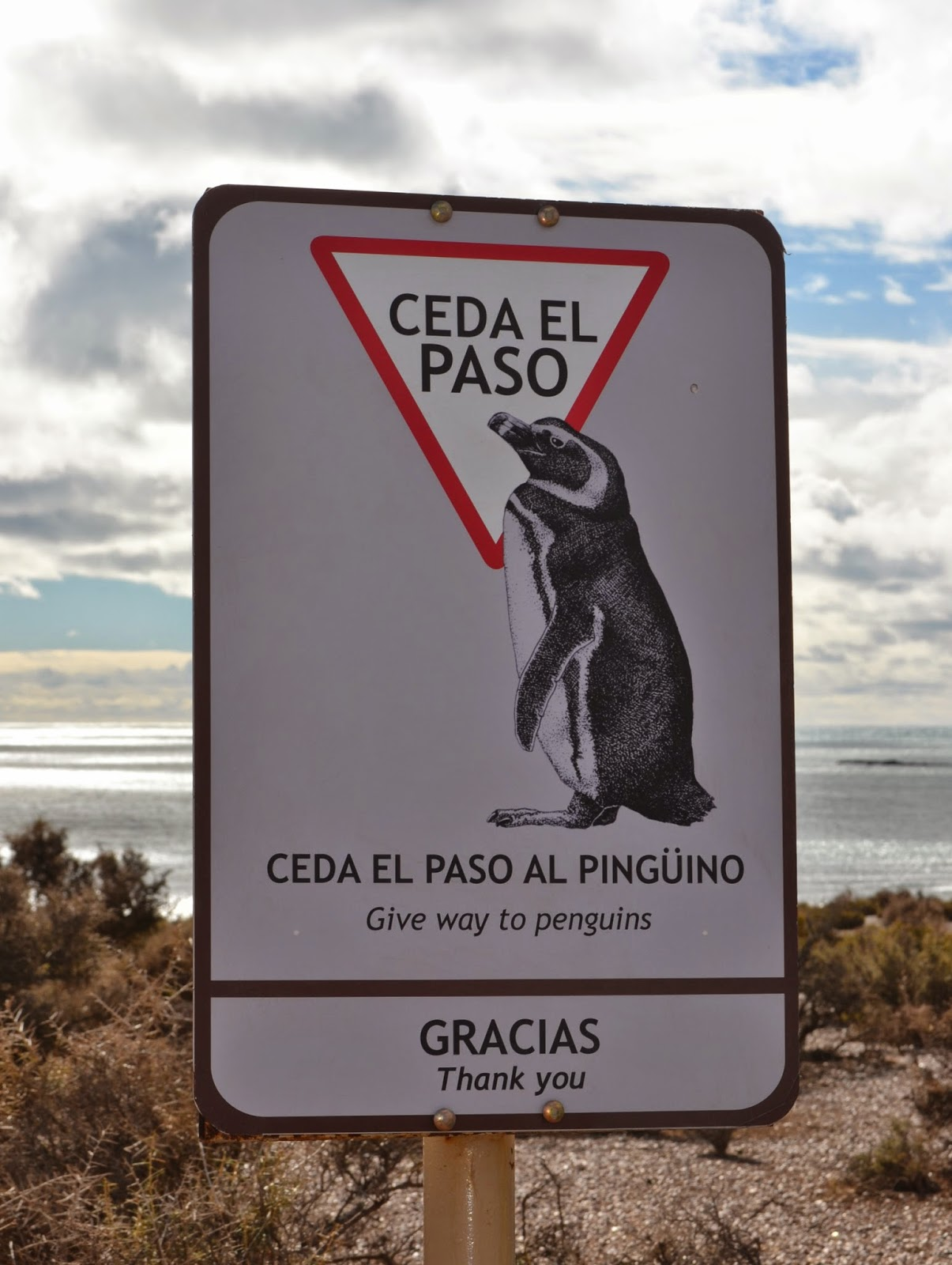 magallenic penguins punto tombo patagonia argentina