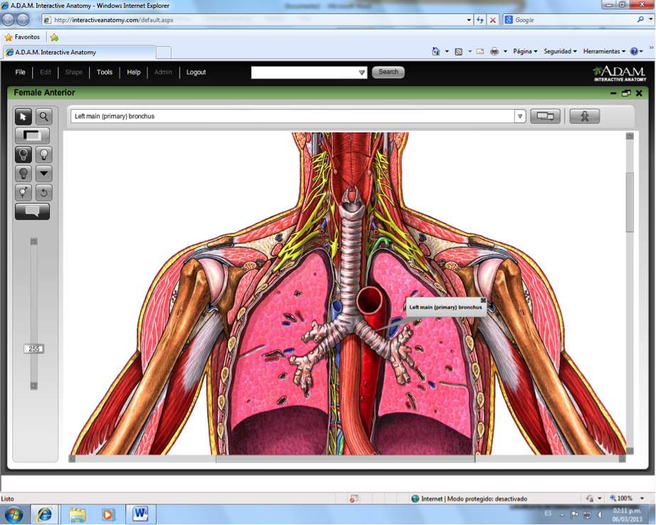 Luxury Interactive Anatomy Software Vignette - Image of internal ...
