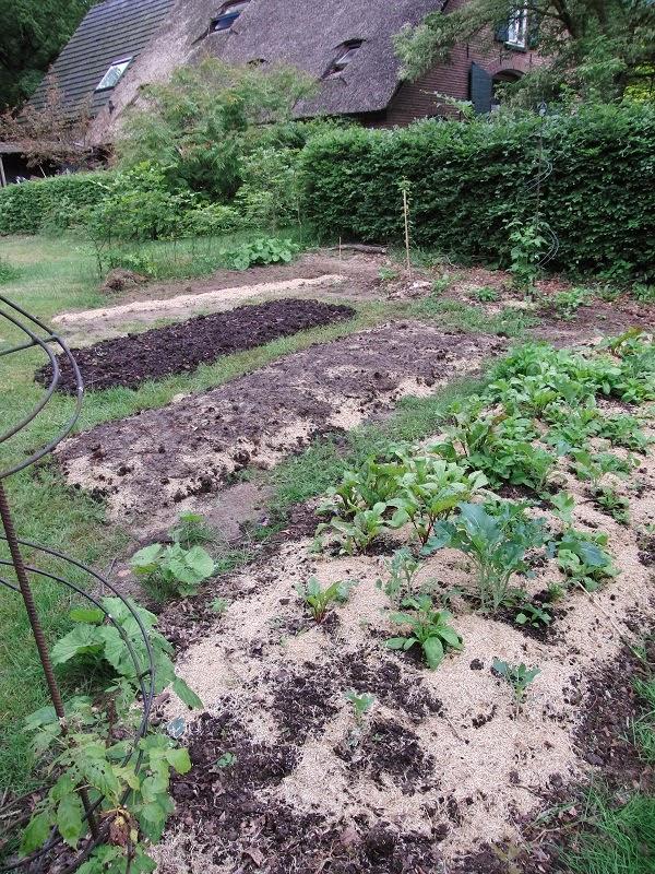 no dig garden, permacultuur, groentebed aanleggen met karton