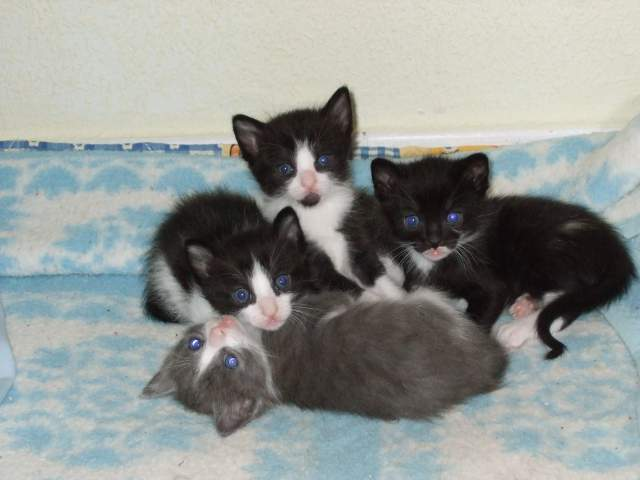 1000 gatos gatitos fuenlabrada - Gatitos de un mes ...