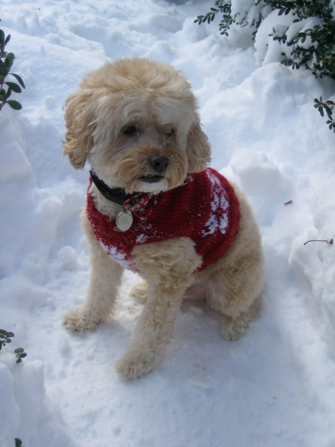 Free Christmas Knitting Patterns: SNOWFLAKE DOG SWEATER