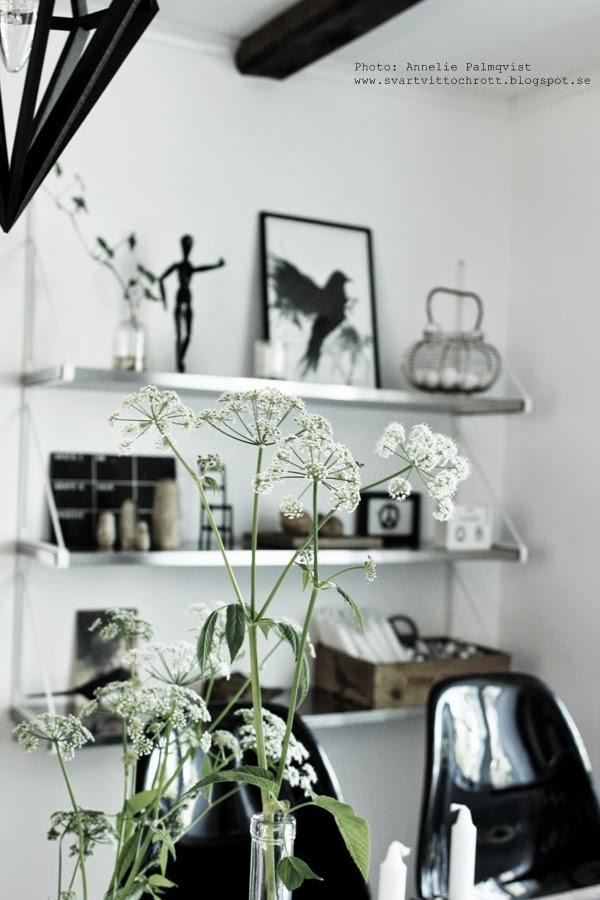Tavlor Koket :  poster, svartvita motiv po tavlor, tavla, tavlan, hundkex, instagram