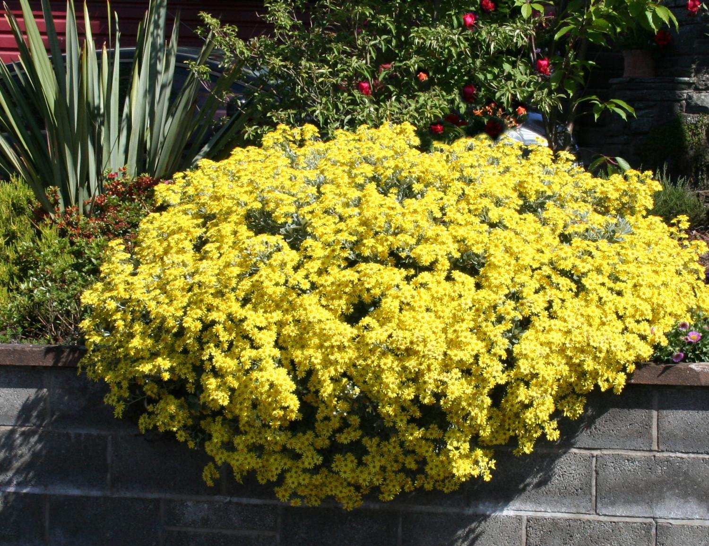 Scottish artist and his garden summer flowering shrubs - Blooming shrubs ...