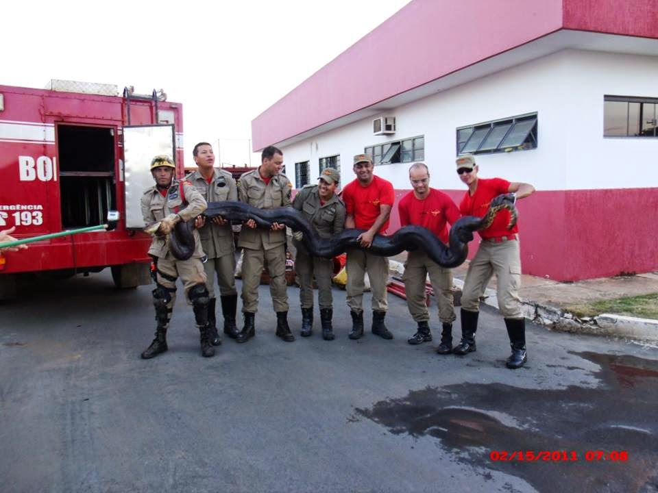 Sucuri gigante é encontrada em Goias