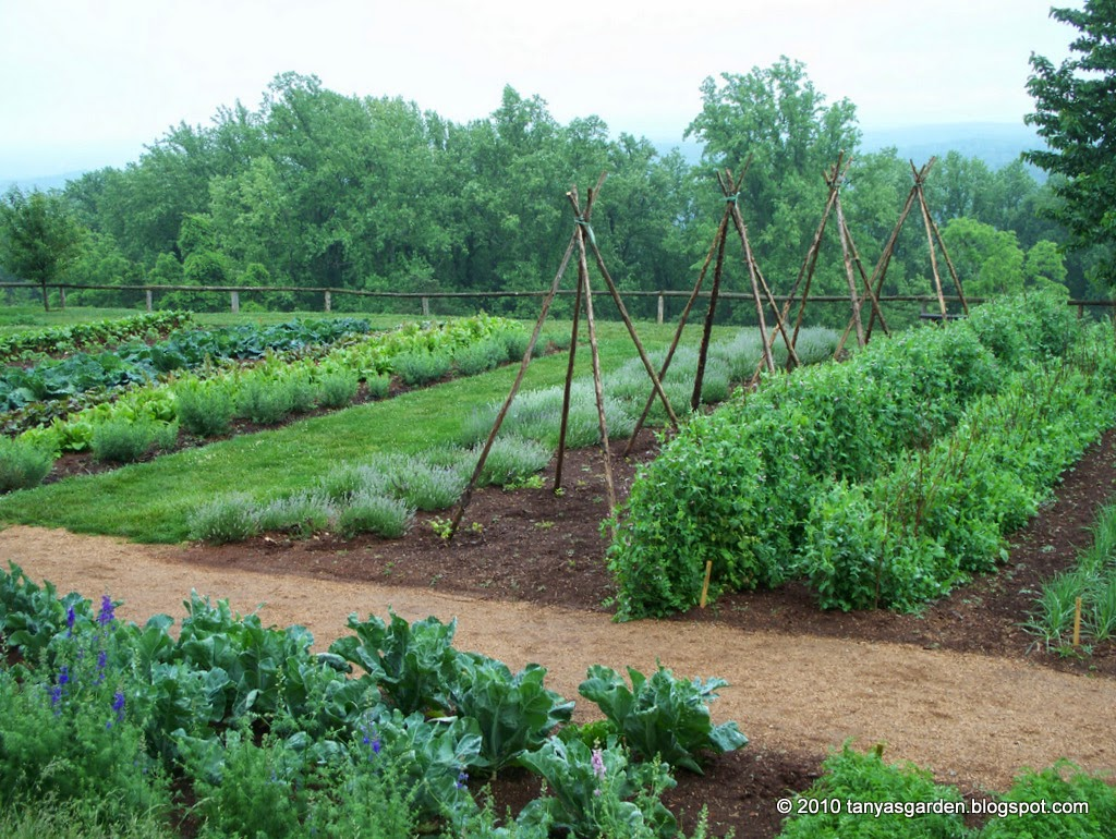 Mysecretgarden colonial gardens part 4 2 monticello for Vegetable garden