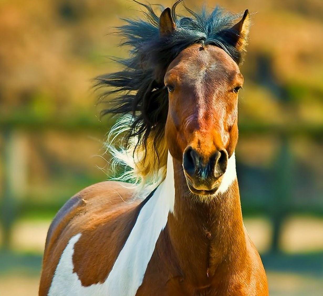imagenes-de-caballos-para-pintar