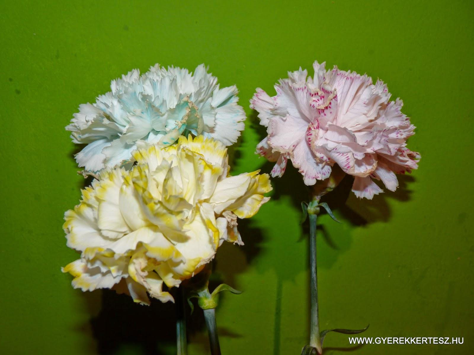 http://2.bp.blogspot.com/-lH5OElE1lqU/VNCNHLtEHyI/AAAAAAAATY8/6ANRpRm0Edo/s1600/viragszinesites3.jpg