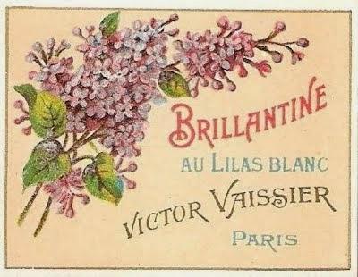 Brillantine au lilas blanc