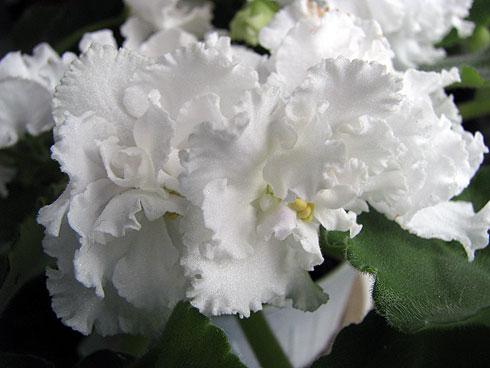 Світ моїх захоплень: Значення квітів