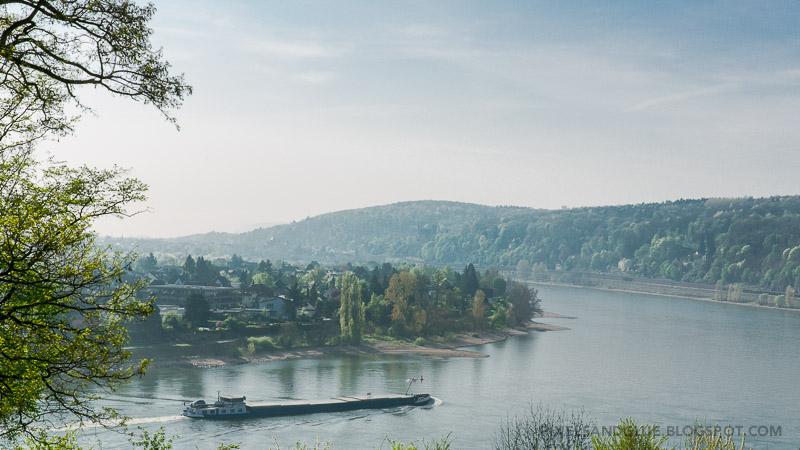 Crop am Rhein 2014 by @pixnglue