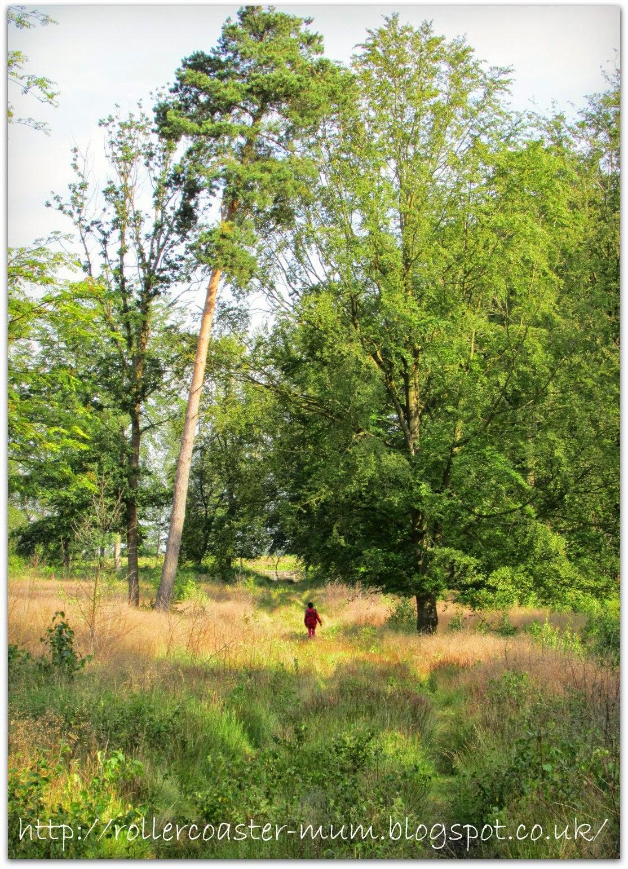 exploring, RSPB BIg Wild Sleep Out Farnham Heath