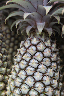 The Antigua black pineapple