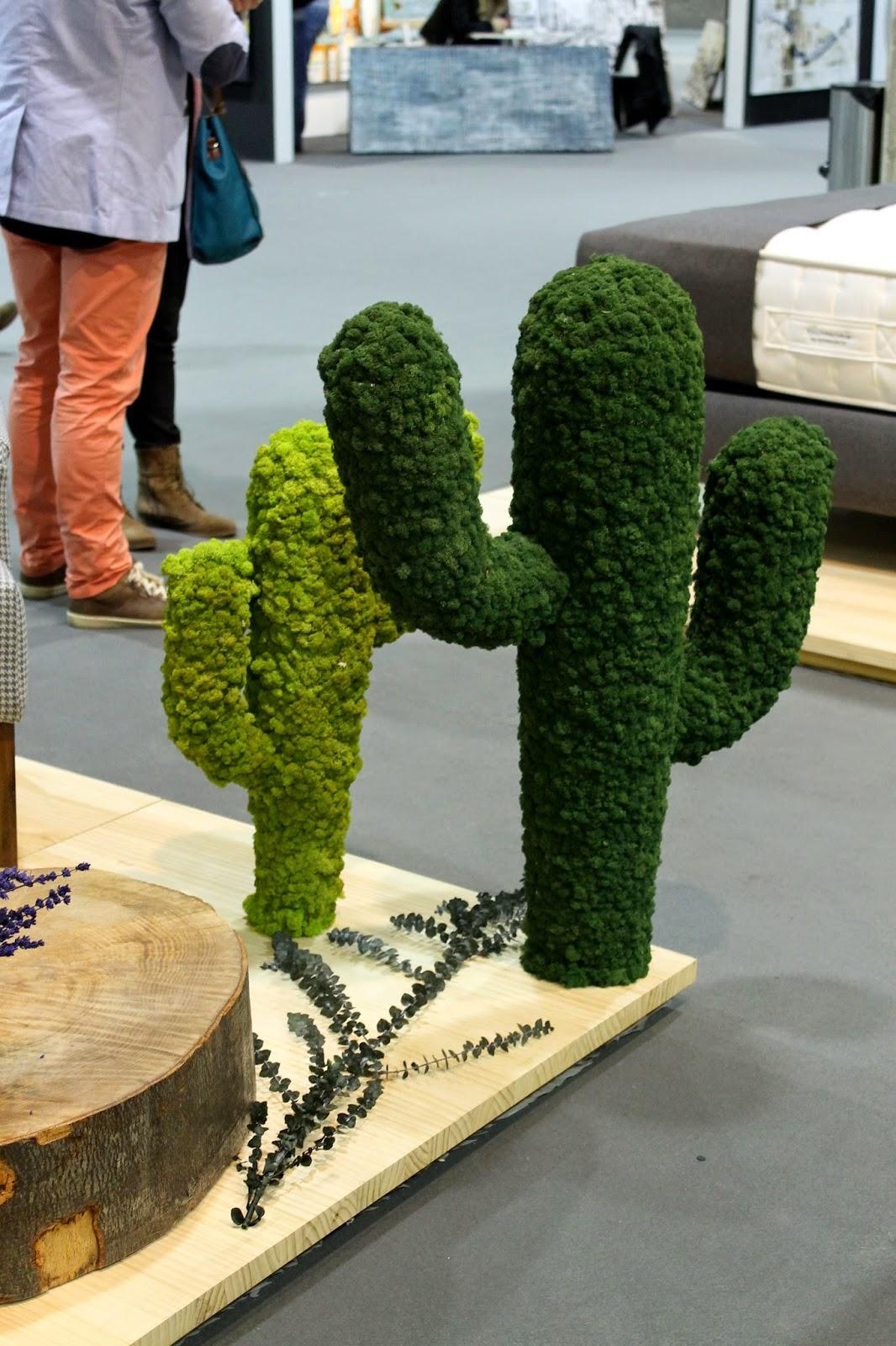 cactus en musgo