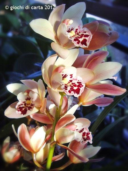 Giochi di carta fiori di orchidea - Orchidea da esterno cymbidium ...