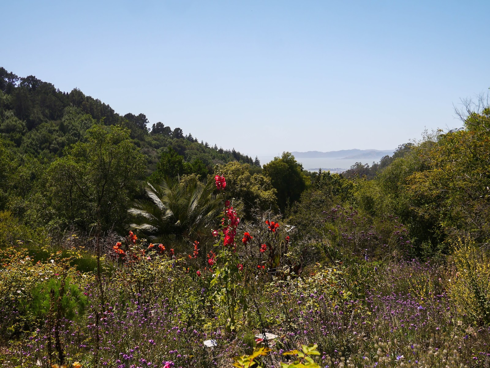Little Hiccups: UC Berkeley Botanical Garden