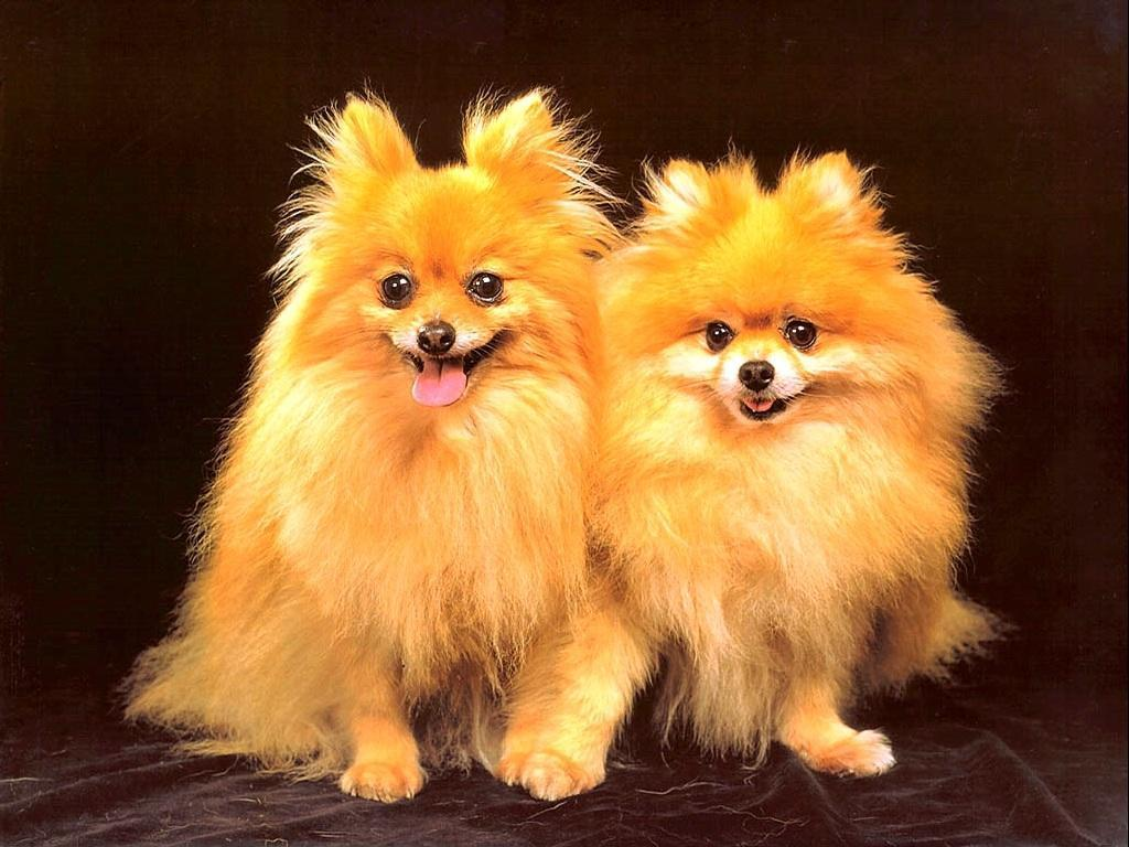 Cute Puppies WallpapersVery Cute Puppies Wallpapers