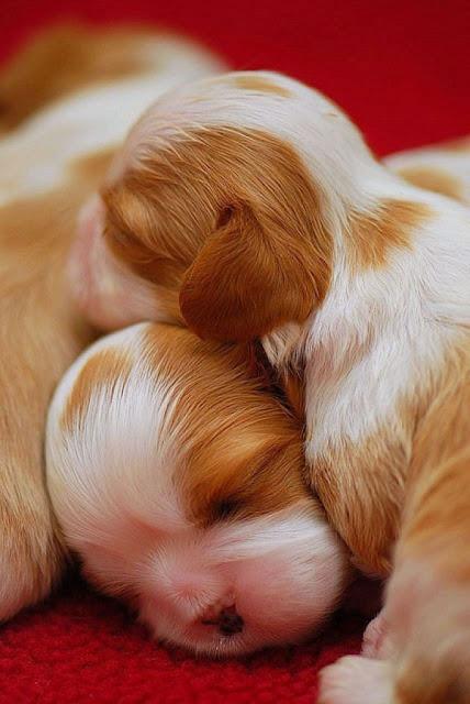 Các em cún đáng yêu chào đón thế giới mới ảnh 13