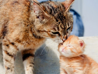 Mengapa induk kucing membunuh anaknya sendiri