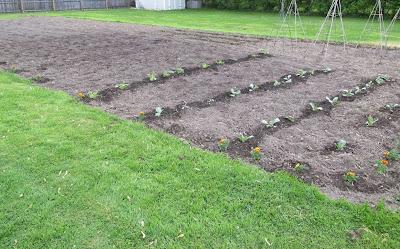 the garden planted so far