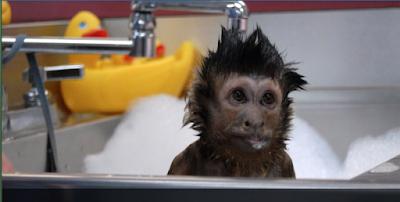 a monkey getting a bubble bath