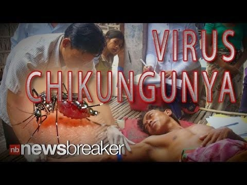 Chikungunya: New Disease Hits The Americas