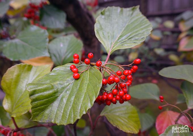 紅葉 - 楽水園、福岡