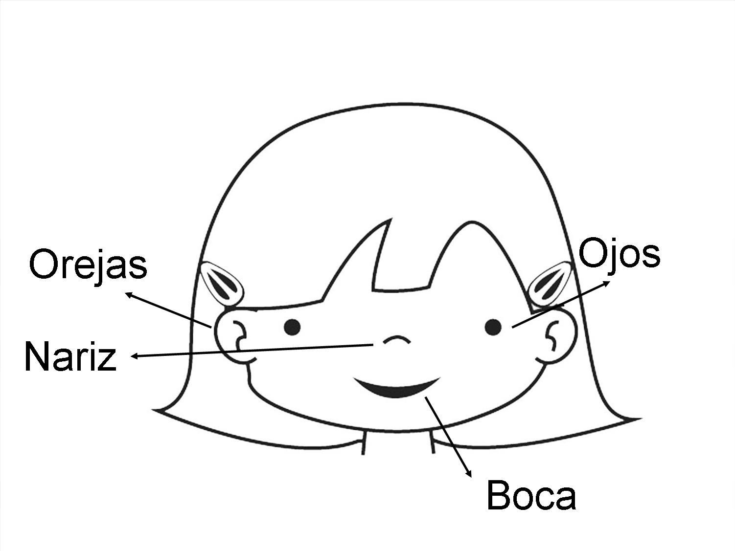 Dibujo de la cara y sus partes en inglés - Imagui
