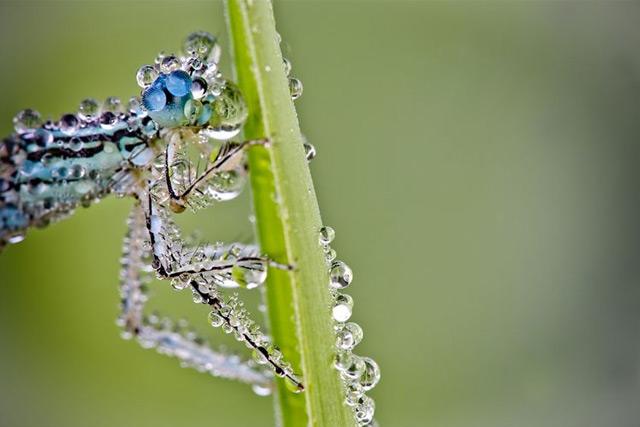 macro de insecto mojado