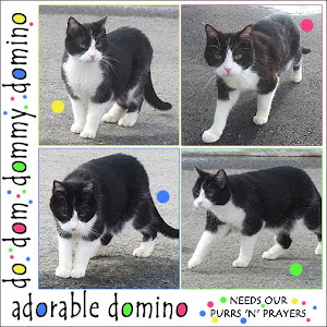 Purrs for Domino