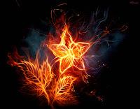 Rosa de fogo