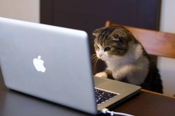 Кот сидит за компьютером