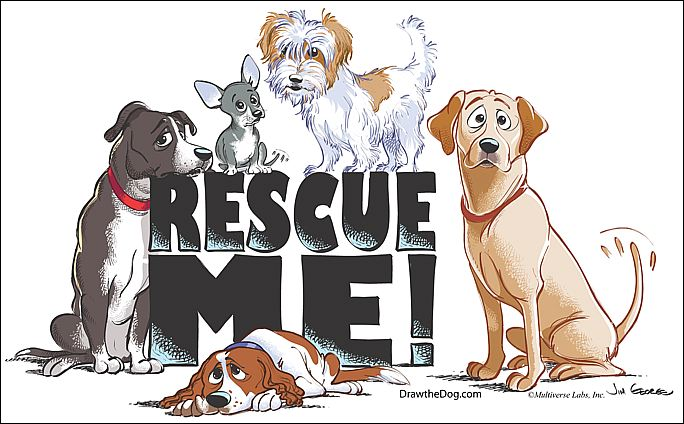 the teacher s pets 7 signs of a reputable dog rescue