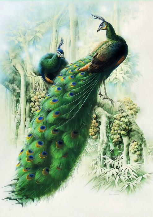 Beautiful Peacock Paintings