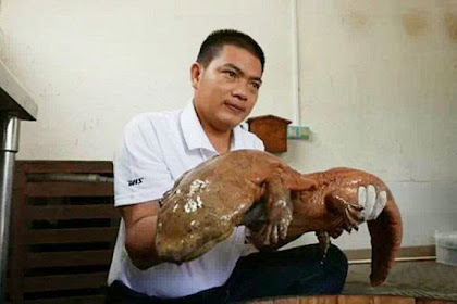 Salamander dari Periode Jurassic Berhasil Ditangkap