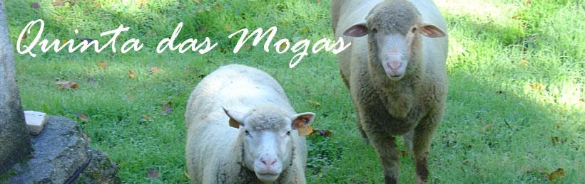 Quinta das Mogas