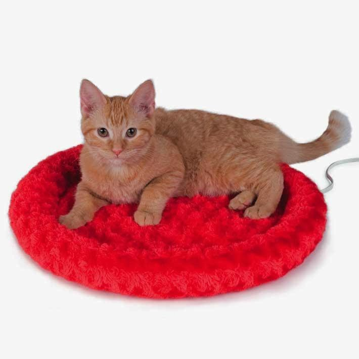 day 3 for cats warm beds