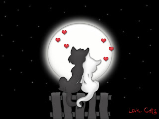 cute love pict - two cat in love