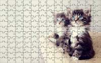 Kittens eyes - jigsaw puzzle