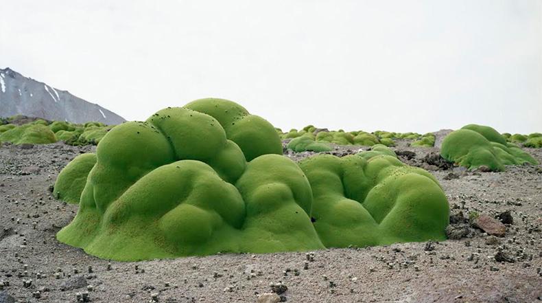 Fotografiando antiguos organismos antes de que desaparezcan