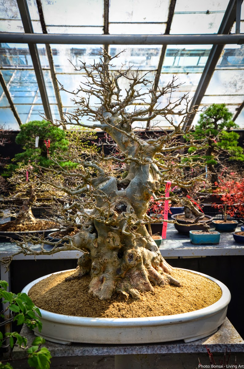 Bonsai Living Art April 2015