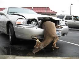 Deer Whistles For Cars Uk