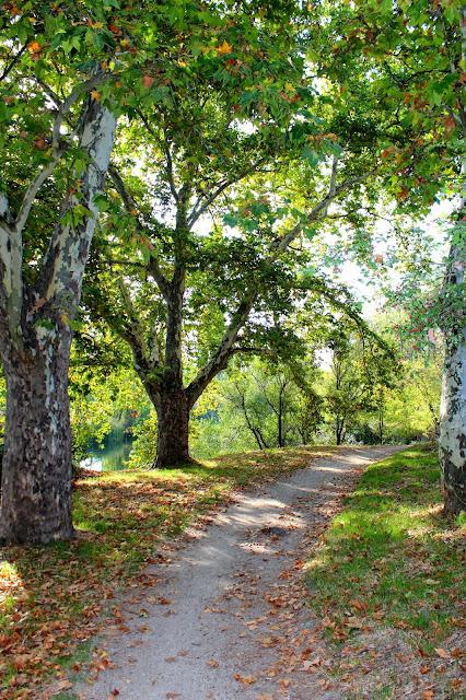 Otoño en el monte de El Pardo. Paseos de otoño. Hojas en el suelo