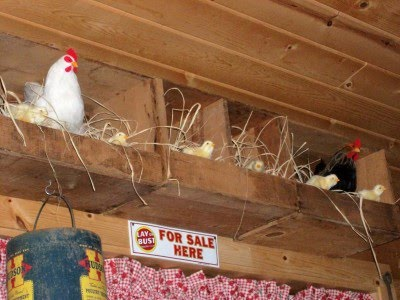 WELL I HAD TO GIVE UP MY CHICKENS