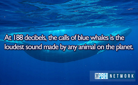 Ocean Whales Facts 10 Amazing Facts About Ocean