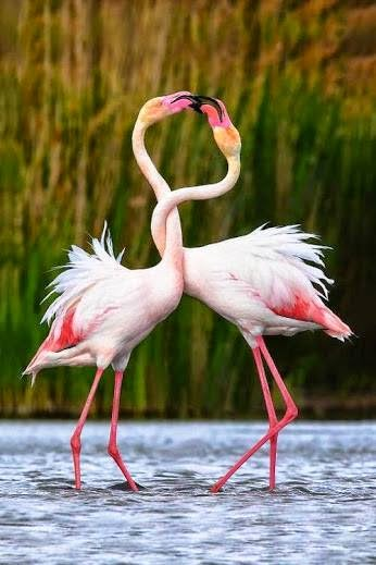 Beautiful World Nature Love Art