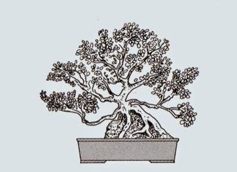 http://evoluzionebonsai.blogspot.it/2015/02/stili-bonsai-sekijoju-radici-su-roccia.html