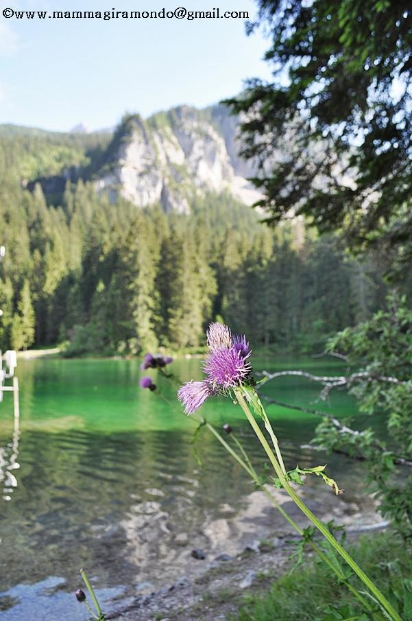 abbastanza Lago Tovel, fiabe e leggende. EM13