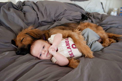 Baby and animals 5